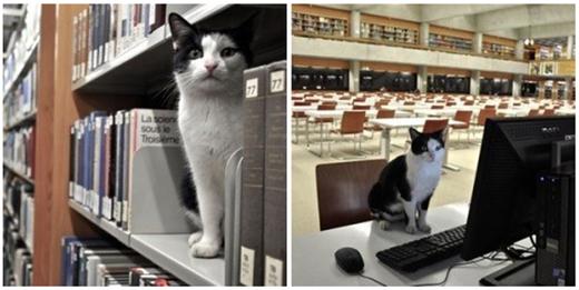 """""""Bà sẽ ngồi chờ ở đây xem đứa nào lục tung sách lên rồi bỏ đi!"""".(Ảnh: BuzzFeed)"""