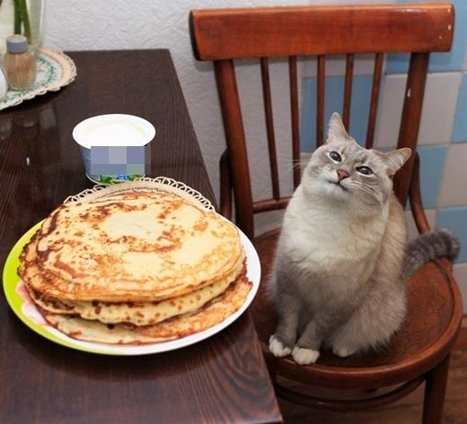 """""""Chào bánh pancake! Rất không vui khi được gặp mi!"""".(Ảnh: BuzzFeed)"""