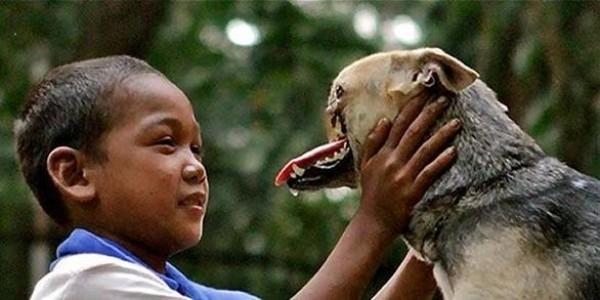Cũng không thể quên chú chó anh hùng Kabang, vì xả thân cứu chủ khỏi tai nạn xe hơi mà bị mất nửa khuôn mặt. (Ảnh: Internet)