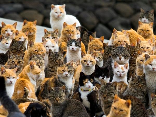 Một đàn mèo tụ tập trên bến cảng ở đảo Aoshima, tỉnh Ehime, miền nam Nhật Bản ngày 25/2/2015. Mèo là chủ nhân của hòn đảo này, chúng xuất hiện ở khắp mọi nơi, cuộn tròn trong những ngôi nhà hoang hoặc khệnh khạng trên những con đường. Số lượng mèo trên hòn đảo này nhiều gấp sáu lần so với số người.