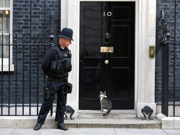 Larry, chú mèo của phố Downing, đợi đến giờ làm tại số 10 phố Downing, London, Vương quốc Anh ngày 7/9/2015.