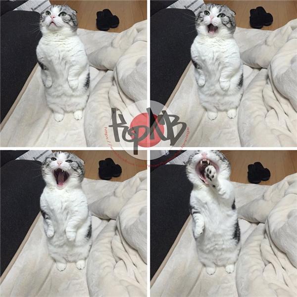 Gặp gỡ cô mèo hot cat khuynh đảo cộng đồng mạng Nhật Bản