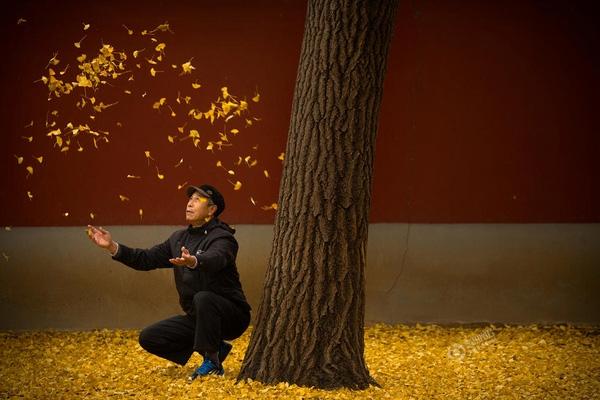 Bức ảnh cụ ông đùa nghịch cùng những chiếc lá bên dưới gốc cây ngân hạnh được Mark Schiefelbein chụp vào ngày 20/11 tại một công viên ở Bắc Kinh, Trung Quốc.