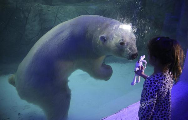 Andre Penner chụp bức ảnh cô bé đang khoe gấu bông với chú gấu Bắc Cực này vào ngày 16/4 tại Sao Paulo, Brazil.