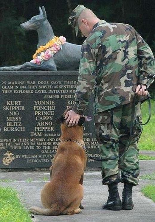 Một chú chó đứng trước bia tưởng niệm quốc gia ghi tên 25 chú chó đặc nhiệm đã hi sinh mạng sống trong trận chiến đảo Guam năm 1944.