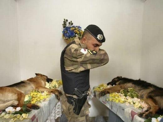 Đám tang dành cho hai chiến binh dũng cảm, trung thành, đáng yêu nhất.