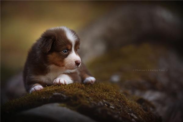 Bộ ảnh tuyệt đẹp về những chú chó với thiên nhiên