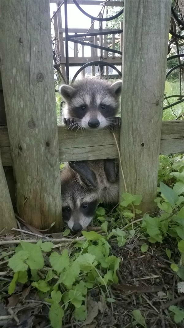 """""""Nghe đồn hàng xóm mới dễ thương lắm mấy đứa ơi!"""".(Ảnh: Viral Nova)"""