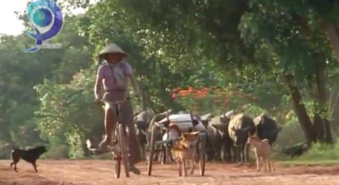 Hình ảnh quen thuộc và đầy xúc động ở huyện Châu Thành, tỉnh Tây Ninh. (Ảnh: chụp từ clip)