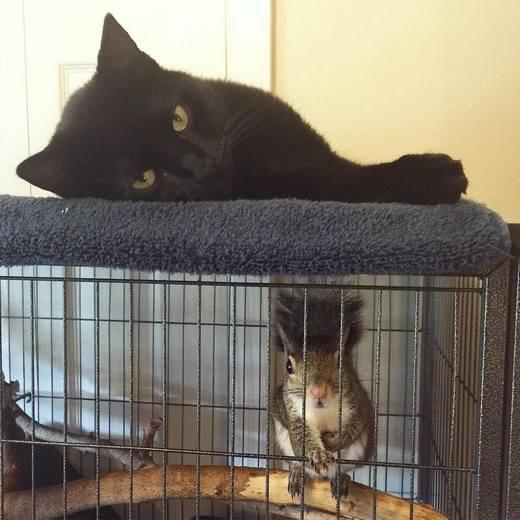 Mèo Binks là BFF (Bạn Thân Nhất) của cô nàng. (Ảnh: Internet)