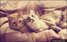 Mình chỉ cần yêu nhau thật nhiều thôi...