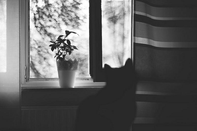 Truyện ngắn: Đóa quỳnh hương bên cửa sổ