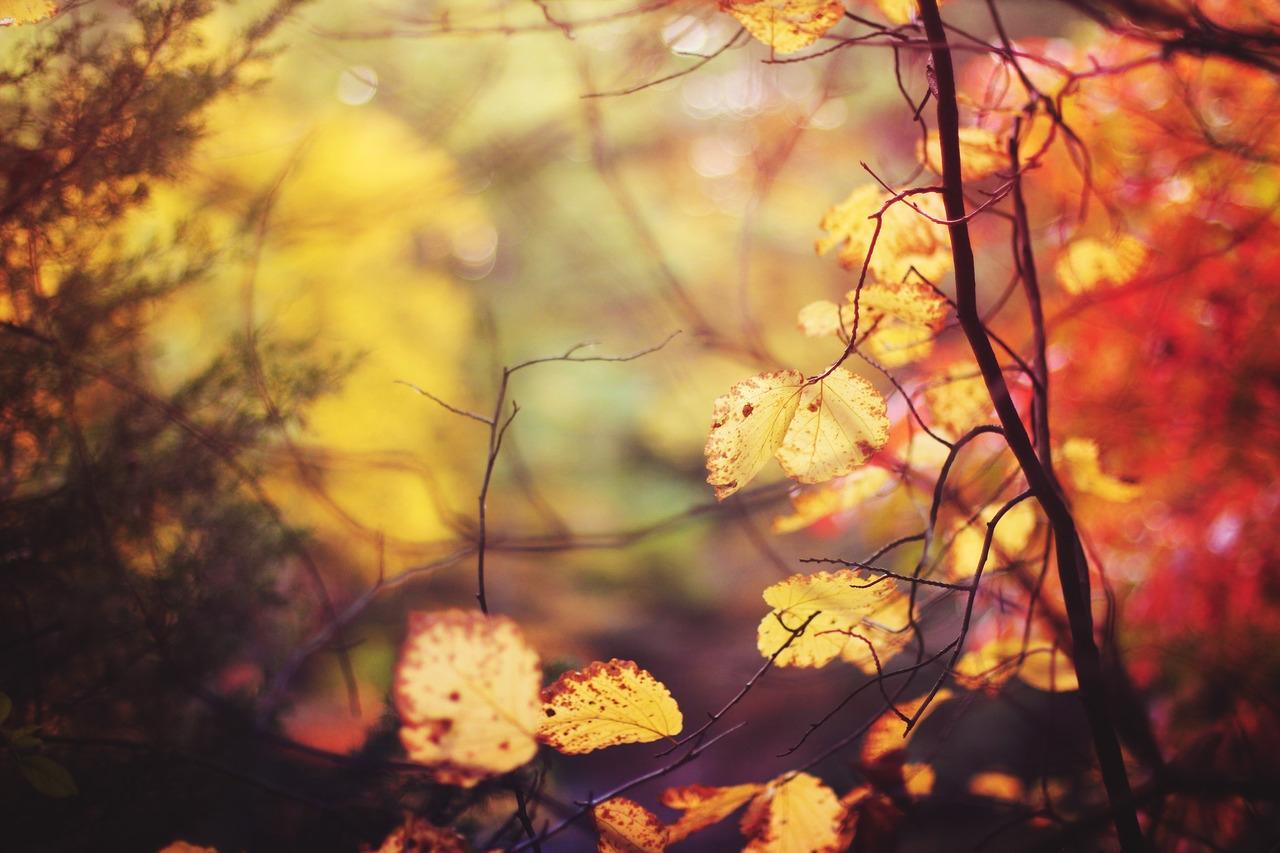 Hãy yêu đi khi mùa vừa rụng lá