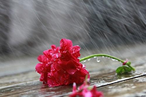 Một cô gái đa cảm và yêu mưa như em, anh có yêu không…?