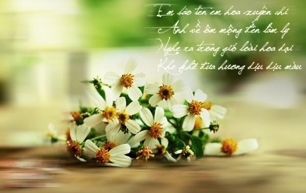 Hoa xuyến chi của tôi