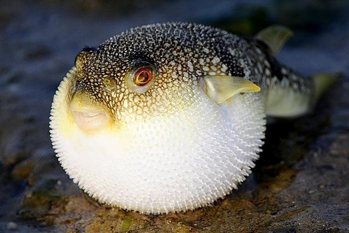 Điểm mặt các loại hải sản chứa độc tố gây nguy hại cho cơ thể