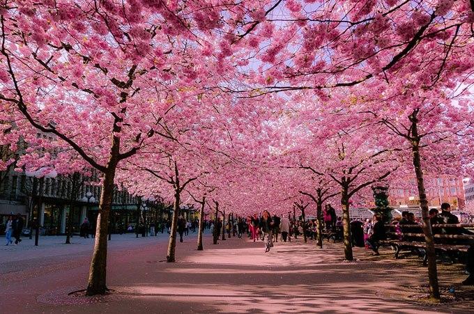 Hơi thở ngày xuân...