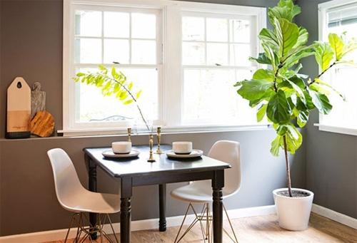 cách giữ cây trong nhà xanh tốt