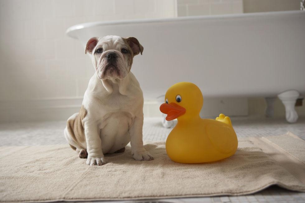 mẹo hay dọn vệ sinh thú cưng