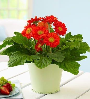 10 cây cảnh bạn phải trồng trong nhà xua tà khí để tiền bạc và tình yêu đủ đầy - Ảnh 7