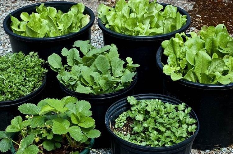 Bí quyết để có rau sạch quanh năm cho cả nhà