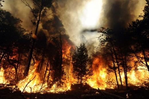 Cháy rừng... là những hậu quả nặng nề doEl Niño gây ra. (Ảnh: Internet)
