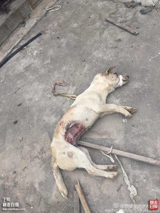 Chú chó vẫn chịutrói khi bị vứt bỏ. (Nguồn Internet)