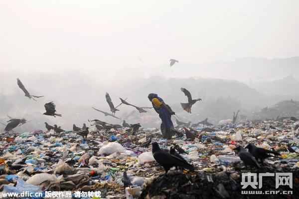 Người dân nghèo trên bãi rác cùng đàn quạ đen xung quanh. (Ảnh: Internet)