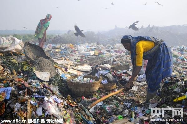 Thắt lòng cảnh con người phải tranh rác với đàn quạ để kiếm sống