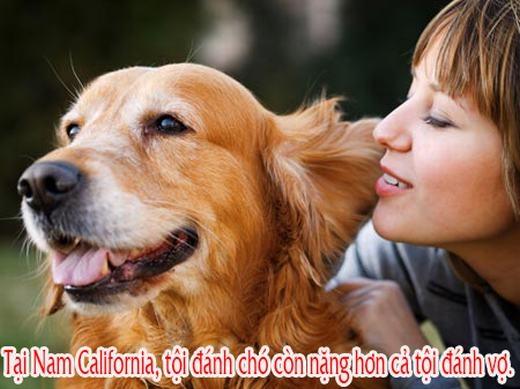 """Những sự thật """"không thể tin nổi"""" về cún cưng khiến bạn muốn nuôi một con"""