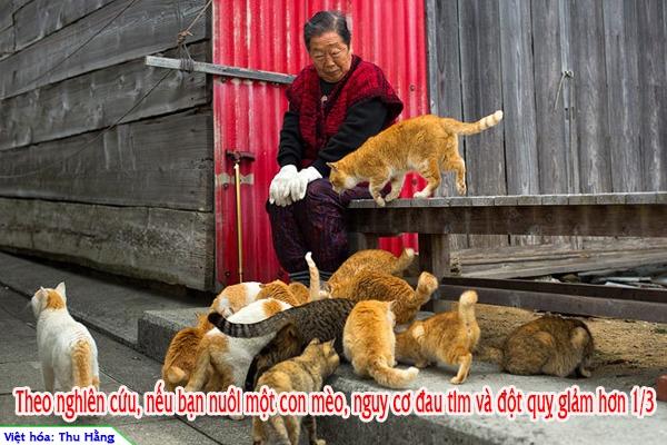 """Sự thật """"ngã ngửa"""" về loài mèo khiến bạn ngạc nhiên, thích thú"""