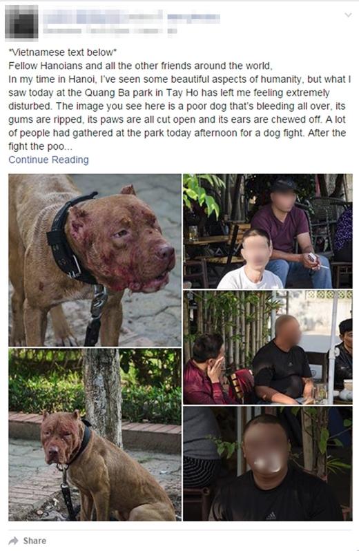 Câu chuyện và hình ảnh về tình trạng chọi chó ở Hà Nội được người đàn ông nước ngoài chia sẻ: Ảnh: Chụp màn hình