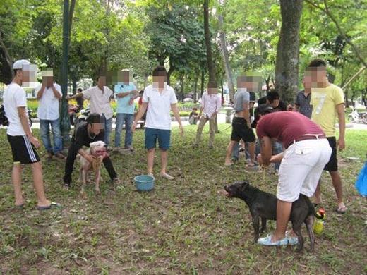 Người nước ngoài bức xúc trước tình trạng chọi chó ở Hà Nội