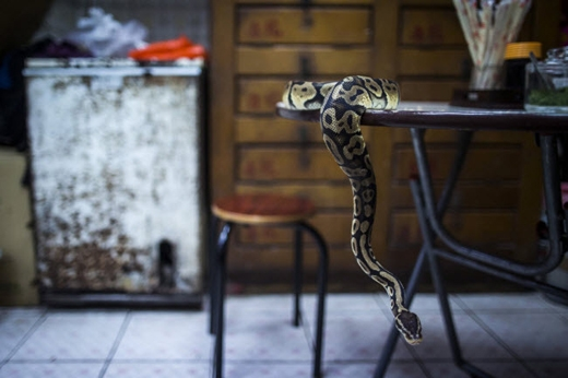 Người dân Hồng Kông cho rằng, ăn thịt rắn sẽ giúp cơ thể được giữ ấm. Ảnh: Internet
