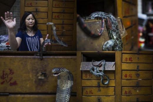 Bà Chau Ka Ling, chủ nhân của cửa hàng She Wong Hip, quận Sham Shui Po đang cầm trên tay một con rắn hổ mang. Ngoài việc kinh doanh, bà Ling còn giúp chính quyền xử lírắn hoang dã. Ảnh: Internet