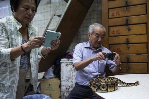 Ngoài bán thịt rắn, các cửa hàng còn nuôi trăn để du khách ngắm và chụp hình loại động vật bò sát này. Ảnh: Internet