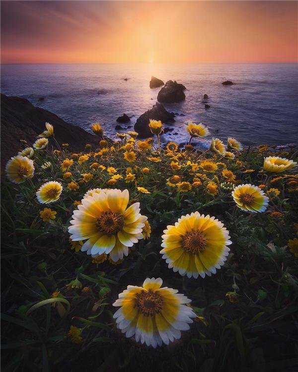 Đôi khi những gì đẹp nhất nằm ở sự đơn giản, như cách những bông hoa dại này nở bung xòe ở mũiMori, thành phốDaly,San Francisco. (Ảnh: IG@shainblumphotography)