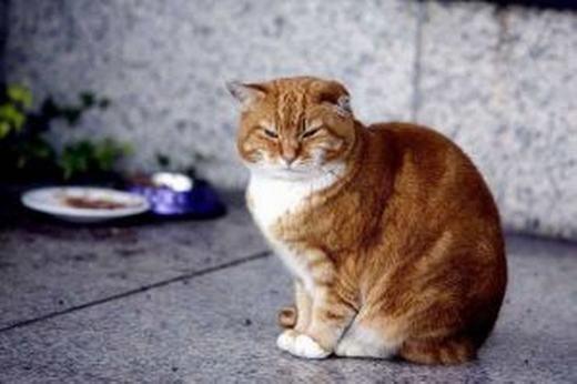 Cô mèo Olly... (Ảnh: Internet)