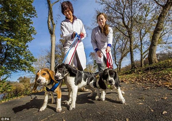 """Đây là kết quả sau hơn 40 năm miệt mài nghiên cứu để cho ra đời những chú chó này. """"Người ta đã cố gắng áp dụng phương pháp này với những chú chó từ thập niên 70 nhưng không thành công. Với sự ra đời của 7 chú chó, có thể nói khoa học đã tiến một bước dài trong việc bảo tồn gen của động vật có nguy cơ tuyệt chủng bằng cách đông lạnh, lưu trữ tinh trùng và tiến hành thụ tinh nhân tạo"""", phó giáo sư Alex nhấn mạnh. (Ảnh:PA)"""
