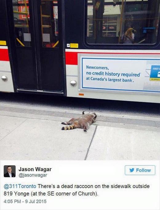 Hình ảnh đầu tiên về cái chết của chú gấu mèo đáng thương. (Ảnh: Internet)