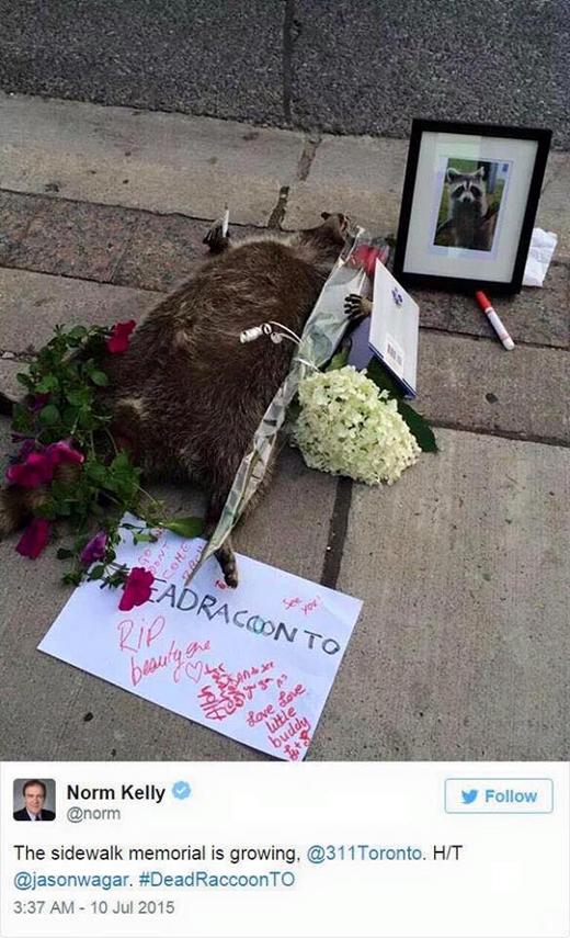 Người dân Toronto đặt hoa thắp nến cho chú gấu mèo tử nạn