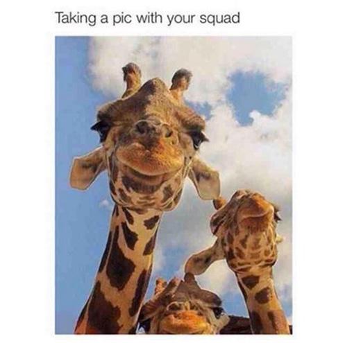"""Chụp ảnh cùng những người bạn cùng chiều cao thì không cần phải bàn cãi, nhưng đến khi """"tự sướng"""" cùng ai đó sở hữu """"chiều cao của hươu cao cổ"""" thì... xác định rồi nhé.(Ảnh: Twitter: @raneemdayoub)"""