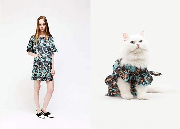 Từ năm 2009, người sáng lập ra United Bamboo bắt đầu nảy ra ý tưởng thiết kế những bộ sưu tập song song cho người và mèo. (Ảnh: Internet)