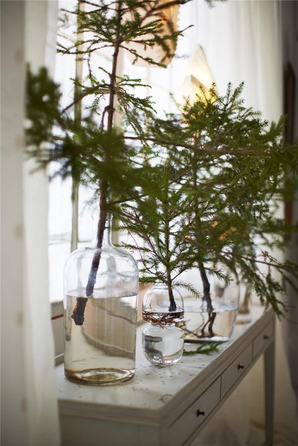 5. Hoặc cách đơn giản là lấy những cành thông nhỏ bỏ vào cốc hoặc lọ thủy tinh chứa nước đặt ở bệ cửa sổ, không khí Giáng sinh cũng sẽ vẫn ngập tràn.