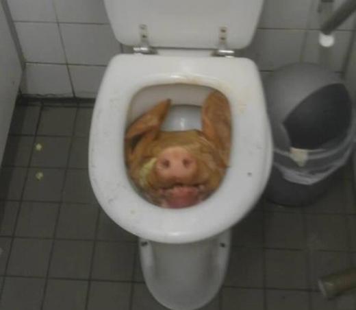 Đầu lợn trong bồn cầu khiến ai cũng phải giật mình.