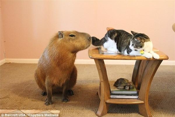 Gary rất thông minh và thân thiện với các con vật cưng khác. (Ảnh; Internet)