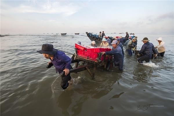 Để kéocá vào bờ, cần 5 đến 6 người đàn ông khỏe mạnh. (Ảnh: Nguyễn Vũ Phước)