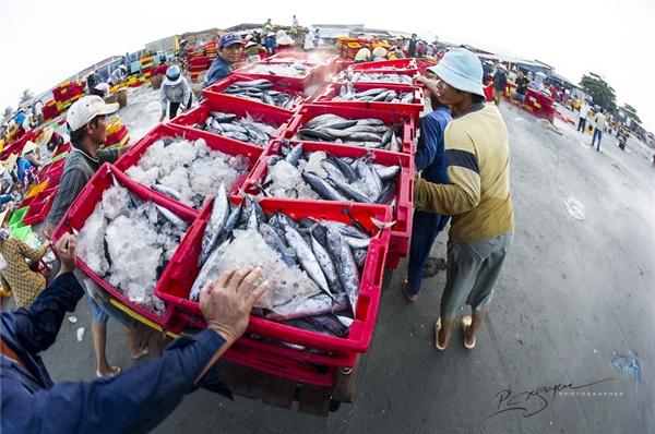 Sau đó, chủ vựa sẽ kiểm tra trọng lượng và phân phốicông nhân chất lên xe tải giao hàng.(Ảnh: Nguyễn Vũ Phước)