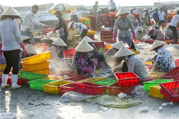 Mọi khâu đều được chuyên nghiệp hóa nên rất nhanh chóng và thuận lợi, đảm bảo nguồn hải sản tươi sống nhất đến với các điểm phân phối trước lúc mặt trời mọc.(Ảnh: Nguyễn Vũ Phước)