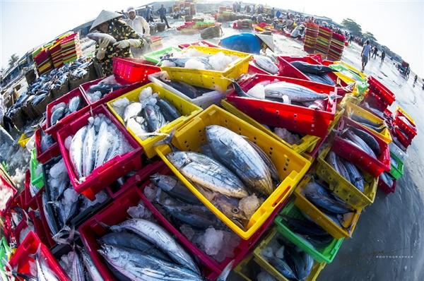 Ước tính có khoảng 500 người thuộc mọi lứa tuổi, giới tính làm việc tại cảng cá Long Hải mỗi ngày.(Ảnh: Nguyễn Vũ Phước)